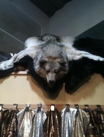 taxidermy wolf