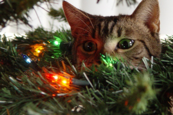 the-world_s-top-10-best-images-of-cats-in-christmas-trees-10